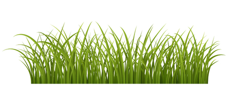 herbage: Green grass border, realistic vector illustration of green grass,  contains transparency.