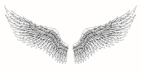 Black and white hand-drawn wings of angel or archangel