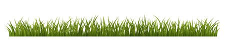 Green grass border, realistic vector illustration of green grass, EPS 10 contains transparency.