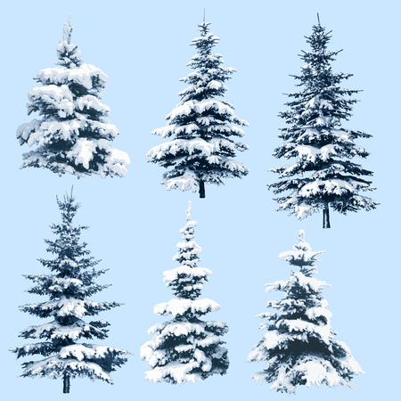 Set of pine trees in snow, illustration of christmas trees, for holiday season and new year, handmade trace. EPS 10 contains transparency.