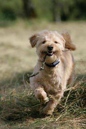 funny dog Zdjęcie Seryjne - 6870126