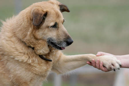 hand in hand with a dog