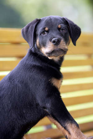 curious puppy photo