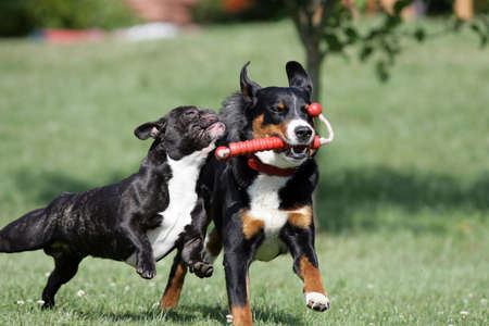 wild playing dogs Banco de Imagens - 8647024