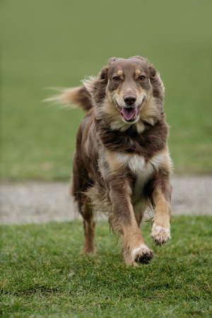 Running dog Banque d'images - 9831041