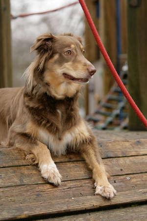 curious dog photo