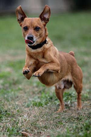 mujer perro: perro de ejecuci�n