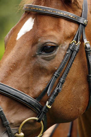Primer plano de la cara de un caballo marr�n Foto de archivo - 8744978