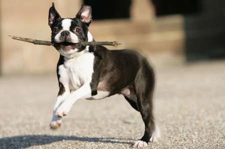 mujer perro: perro feliz Foto de archivo