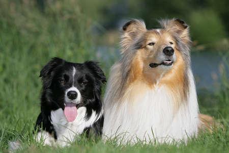 best friends Stock Photo