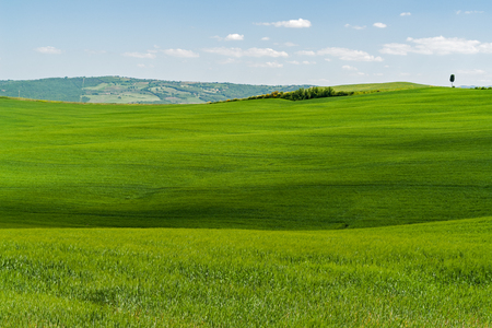 Typical Tuscany Landscape with green Grass and Hills - Tuscany, Italy Stock Photo