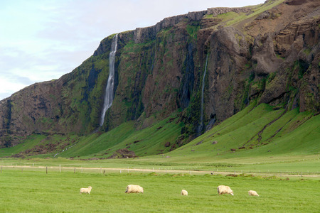 Iceland landscape with waterfalls and sheeps - South Iceland