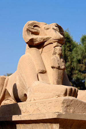 Close-up on ram-headed Sphinx in Karnak Temple - Luxor, Egypt. The avenue of sphinxes consist of statues with lions bodies and the heads of rams, symbolizing Amun.