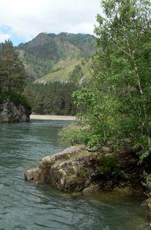 chemal: A river Chemal, birches, stone. Mountains Altai.