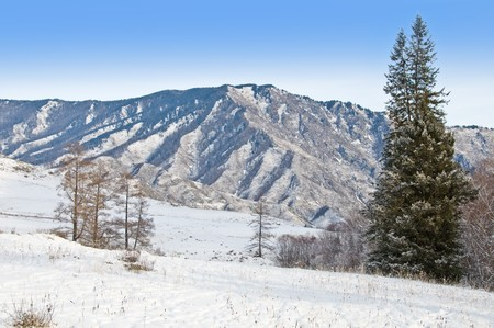 Peak of mountain and fur-tree. Winter in Altay. photo