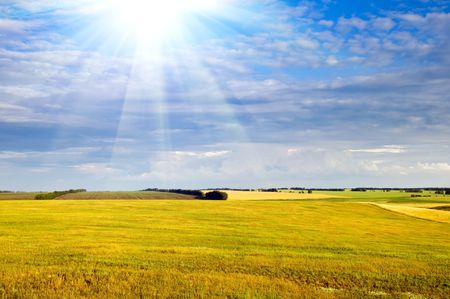 Yellow field, crop and the dark blue sky with sun beam photo