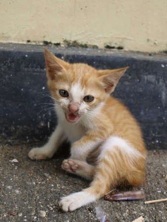 litle: angry litle kitty  Stock Photo