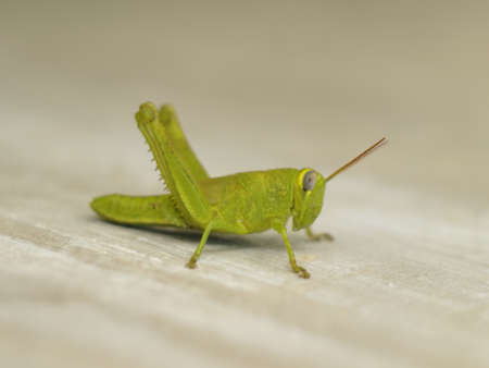 grasshopper on the wall Stock Photo - 9627990