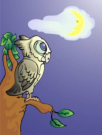 single owl in the night Illustration