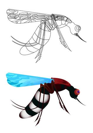 mosquito isolated in white Stock Vector - 13440581