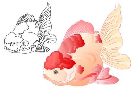 poissons de koi