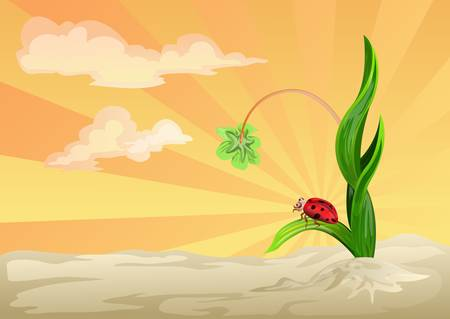 lady bug on grass with sunset background Vector