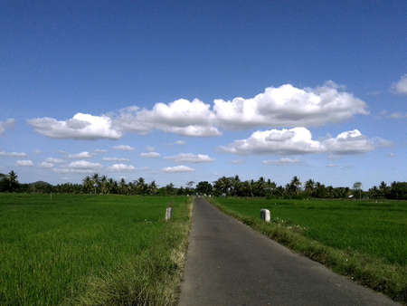 Road in rice field landscape with cloudy sky
