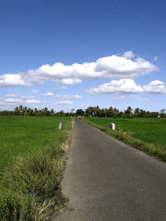 Road on ricefield with cloudy sky  Stock Photo