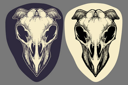 eye hole: Dead Cow skull hand draw vector illustration in dark and bright color Illustration