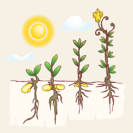 growth of plantation hand draw illustration under the sun
