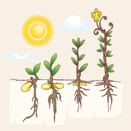 plantation: growth of plantation hand draw illustration under the sun