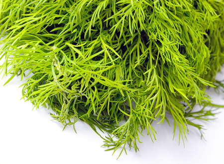 Fresh green dill herb Zdjęcie Seryjne