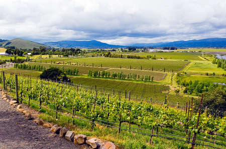 Magnificent beautiful landscape view of vineyards in California Napa Valley wine country Zdjęcie Seryjne