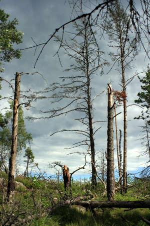 acido: Muerte de los bosques Foto de archivo