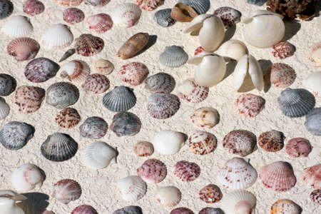 Multicolored mussel and snail shells photo