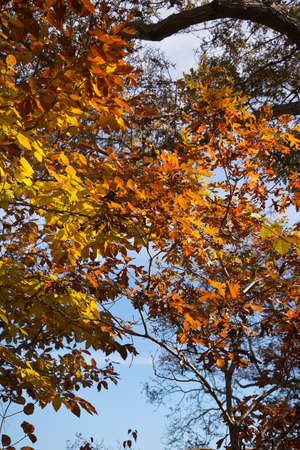 discolored: Indian summer