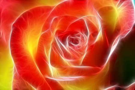 pflanzen: Orangene Rose mittels eines EBV Filters bearbeitet. Stock Photo
