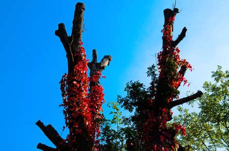 arboles secos: Los árboles muertos y las hojas
