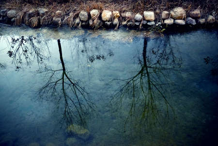 beck: reflection of trees in the river