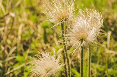 野草: close up of wild grass