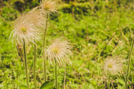 wild grass: close up of wild grass