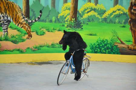 black bear: a black bear is performing