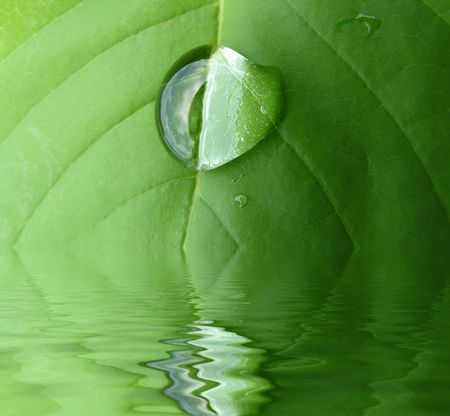 drop in: Green leaf with a drop dipping in to water Stock Photo