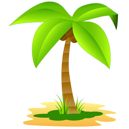 palm leaves: palm tree Illustration