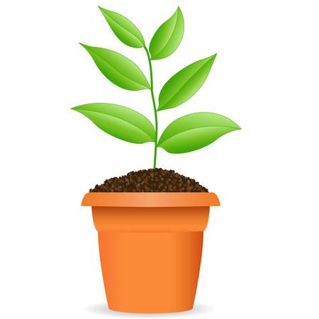 Verde de la planta en una maceta de flores Ilustración de vector