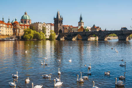 Prague. Image of Charles Bridge in Prague with swans in the foreground