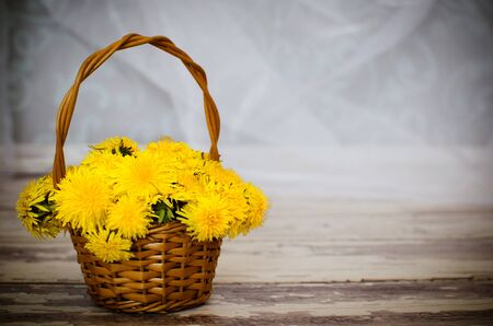 Wicker backet with  yellow spring flowers - sow-thistles with space for your text photo