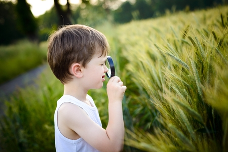 little boy watching the cultivation of rye with a magnifying glass - summertime photo