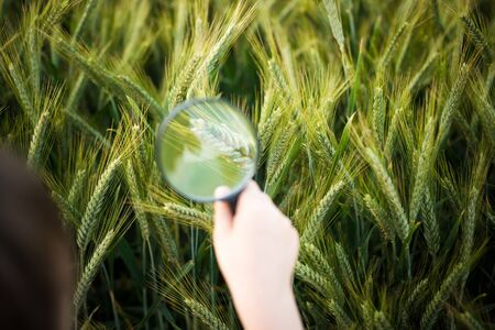 child looks at the rye through a magnifying glass in his hand photo