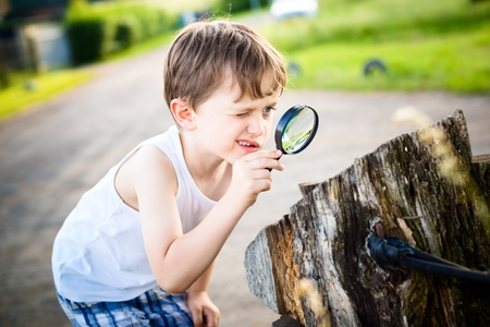little boy looks at a tree trunk through a magnifying glass - summertime photo